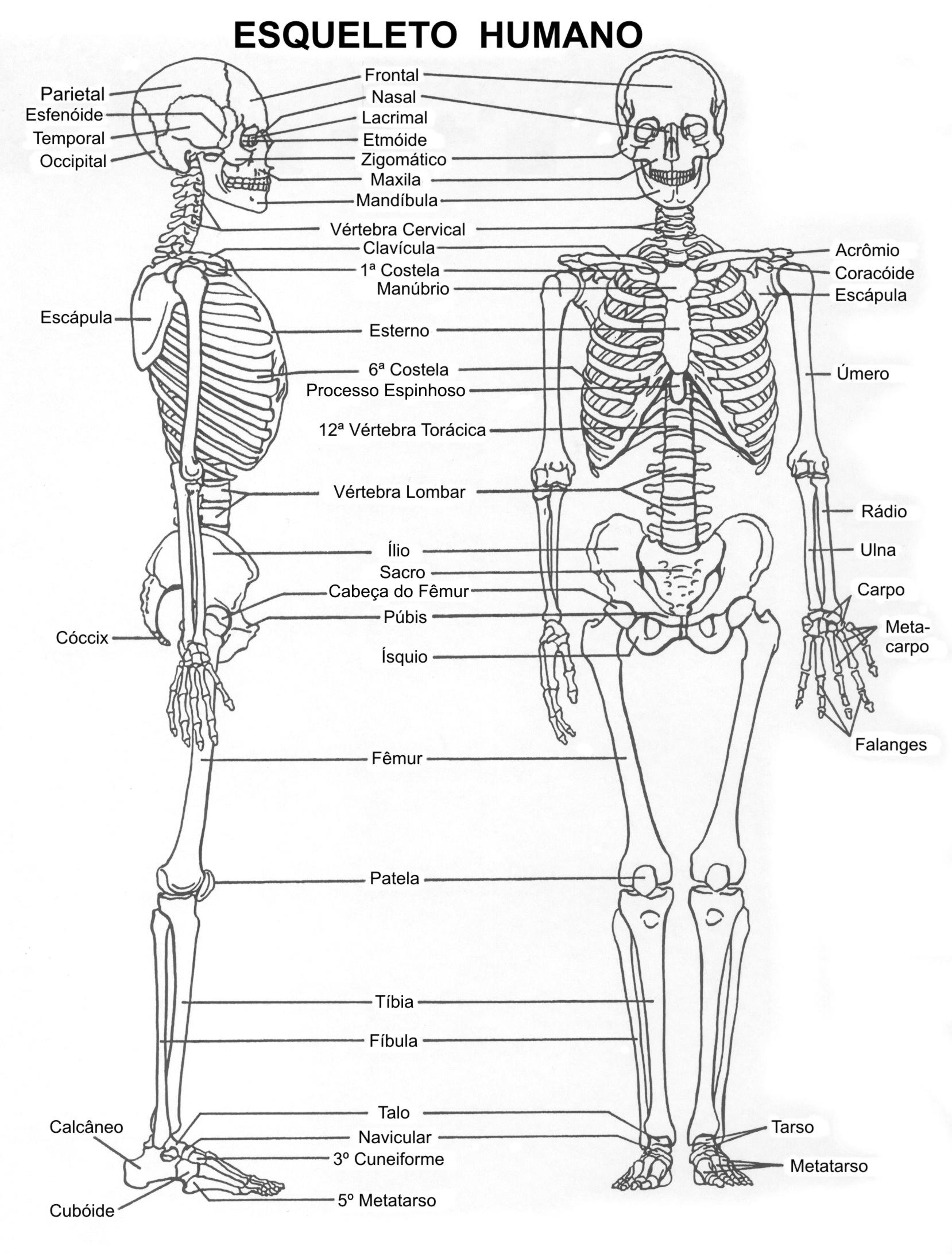 esqueleto | El blog de la profe